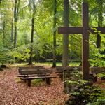 Kosten einer Waldbestattung ermitteln