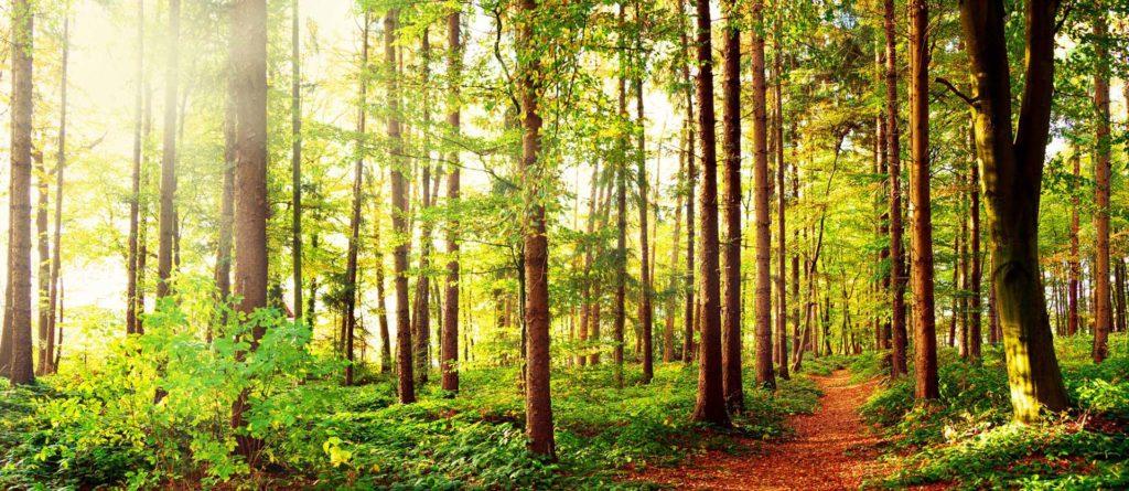Bestattungswald: Anbieter FriedWald und RuheForst