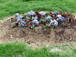 Frische Grabbepflanzung mit Stiefmütterchen