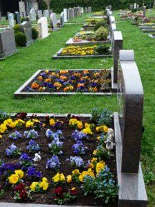 Erdbestattung: Gräber mit Frühlingsblumen