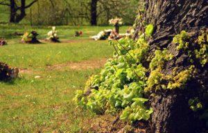 Tree of Life Baumbestattung: Baumgrab auf städtischem Friedhof