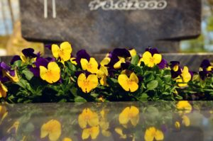 Stiefmütterchen auf einem Grab