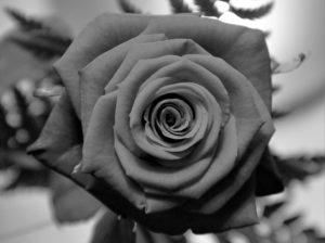 Motiv für eine Trauerkarte: Rose
