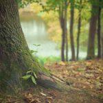 Bestattungsverfügung: Wald aussuchen