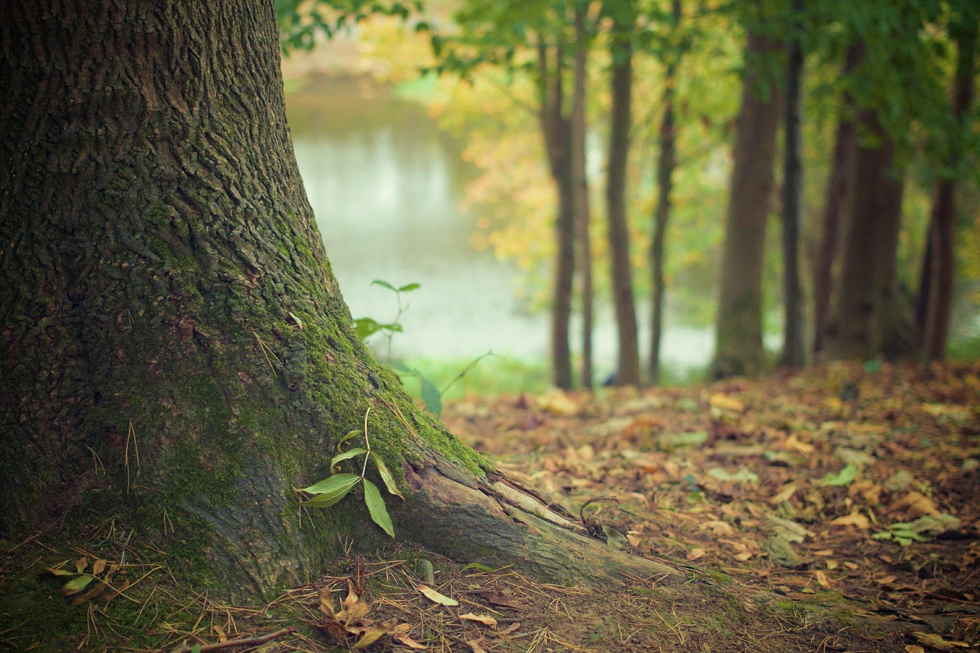 Waldbestattung: Weg in einem Bestattungswald