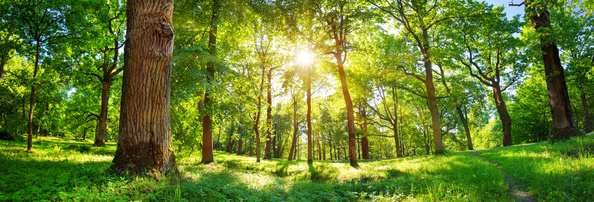 Tree of Life Bestattung: Bestattungswald