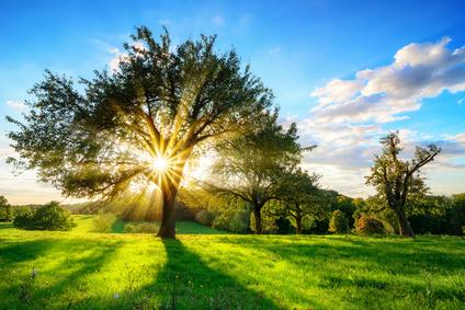 Tree of Life Bestattung: Naturschutzgebiet