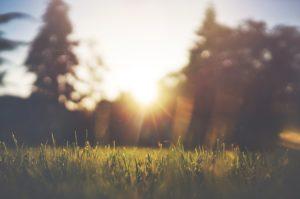 Was mostet eine Beerdigung auf der grünen Wiese? Wiesengrab