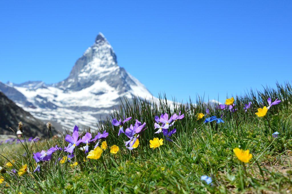 Almwiesenbestattung in den Schweizer Alpen, Blick auf das Matterhorn