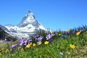 Alternative zur Luftbestattung: Almwiesenbestattung in den Schweizer Alpen