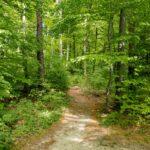 Friedhof in Köln: Waldbestattung planen