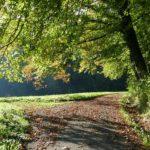 FriedWald Elisenruhe bei Überlingen am Bodensee