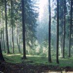 Friedhof in Chemnitz finden: Waldbestattung planen