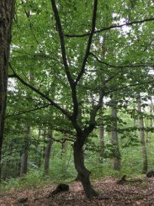 Kleine Bäume im RuheForst Hümmel