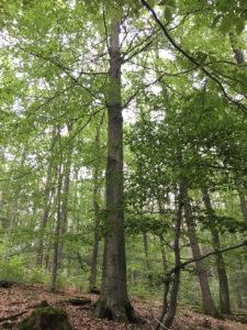 Mittelgroße Bäume im RuheForst Hümmel