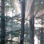 Waldbestattung im RuheForst Hümmel