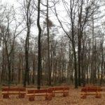 Waldbestattung im RuheForst Cappenberg planen