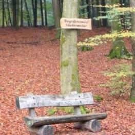 Billigste Bestattung, anonyme Waldbestattung