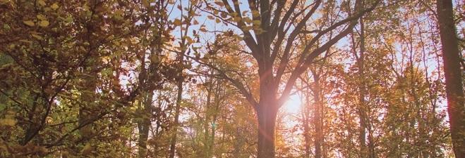 Laubbäume im RuheForst Bückeburg