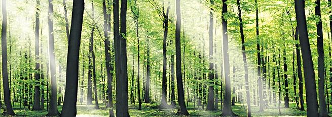 Waldbild im RuheForst Bückeburg