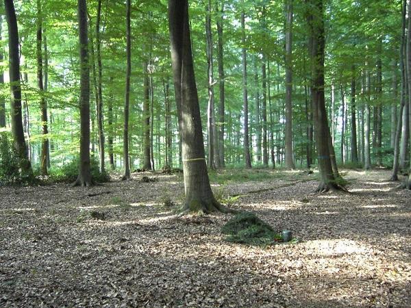 Baumexemplare im RuheForst Bückeburg