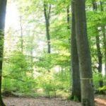 Waldbestattung im RuheForst Bad Arolsen planen