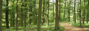 Waldgebiet im RuheForst Bad Arolsen