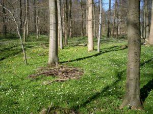 Bäume verschiedenen Alters im RuheForst Brodau