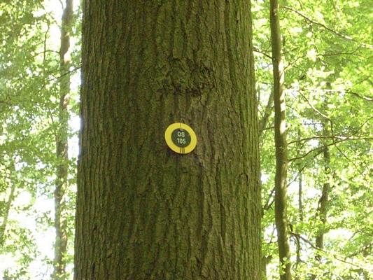 Gemeinschaftsbaum im RuheForst Brodau