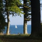 Waldbestattung im RuheForst Brodau planen