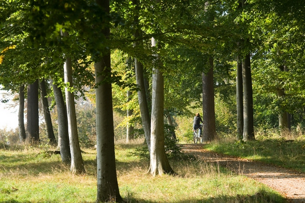 Waldweg im RuheForst Brodau