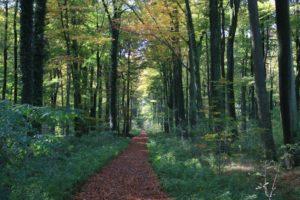 Bäume im RuheForst Cappenberg