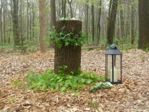 Urnenablage im RuheForst Cappenberg