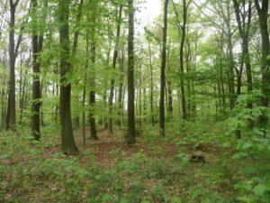 Waldbestattungen im RuheForst Cappenberg