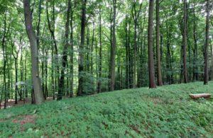 RuheForst Eberswalde, Waldbild