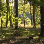 Bestattung im RuheForst Eberswalde planen