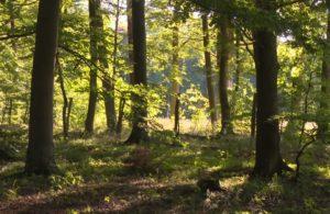 Waldrand im RuheForst Eberswalde