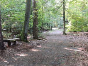 Waldweg im RuheForst Kaiserslautern