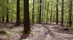 Waldbild - RuheForst Kaufungen