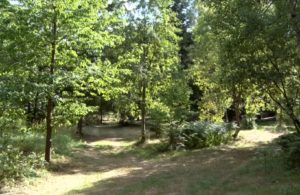 RuheForst Pfälzerwald, Waldbild