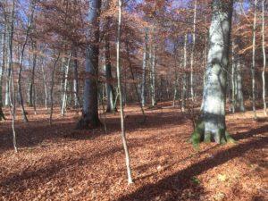 Herbst im RuheForst Weidenstetten
