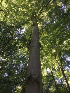 Baum als RuheBiotop im RuheForst Weidenstetten