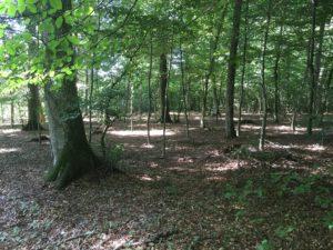 RuheForst Weidenstetten, Waldbild