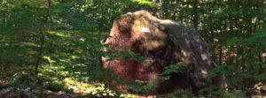 Findling im RuheForst Wilgartswiesen