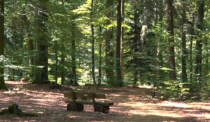 Sitzbank im RuheForst Wilgartswiesen