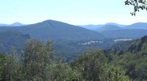 Südpfälzer Bergwald