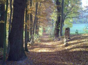 Waldweg im RuheForst Marklohe