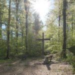 Bestattung im FriedWald Münsingen planen