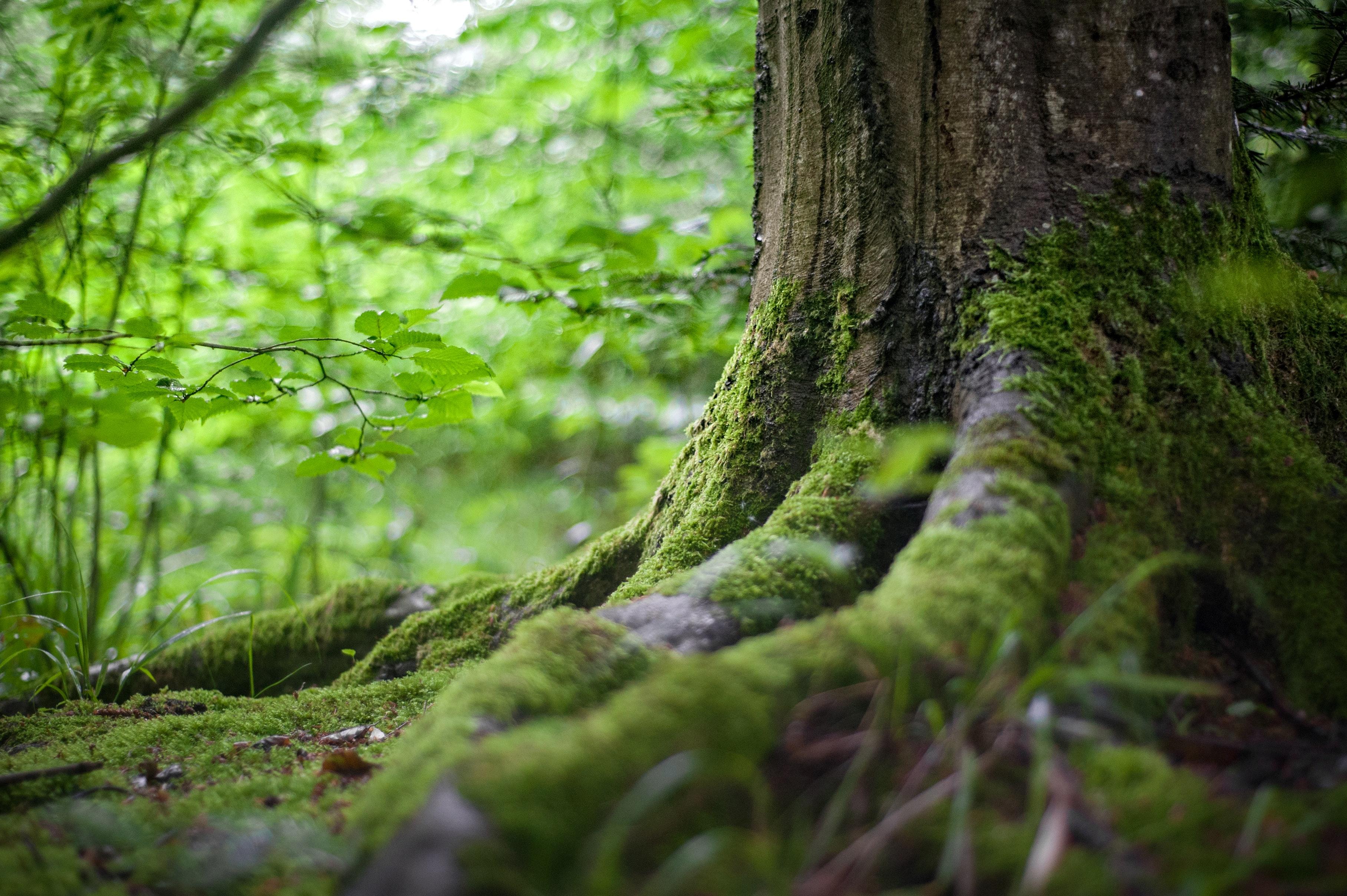 Wurzelwerk eines Baumes