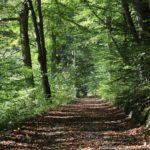 RuheForst Westmünsterland-Coesfeld